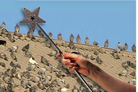 Soluzioni di allontanamento volatili e piccioni tramite for Dissuasori per piccioni a nastro rifrangente